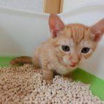 砂があればそこはもう猫専用トイレ!猫にとって快適な猫トイレを選ぼう!