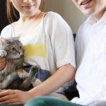 猫を飼うと決めたらペットショップ、ブリーダー、里親、どこで迎える?猫の入手方法