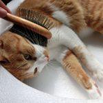 猫のブラッシング方法、頻度は?ブラシは?嫌がるときの対応方法