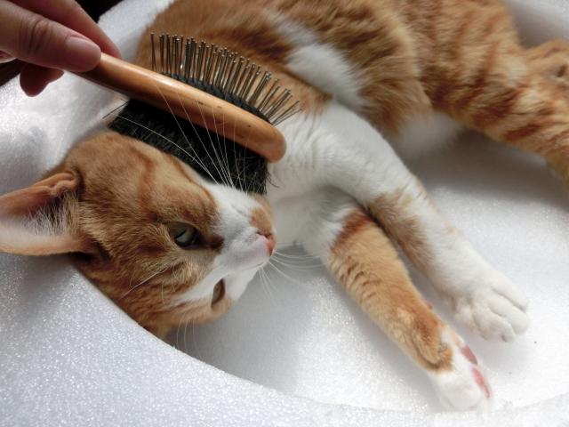 猫の毛をブラッシングする
