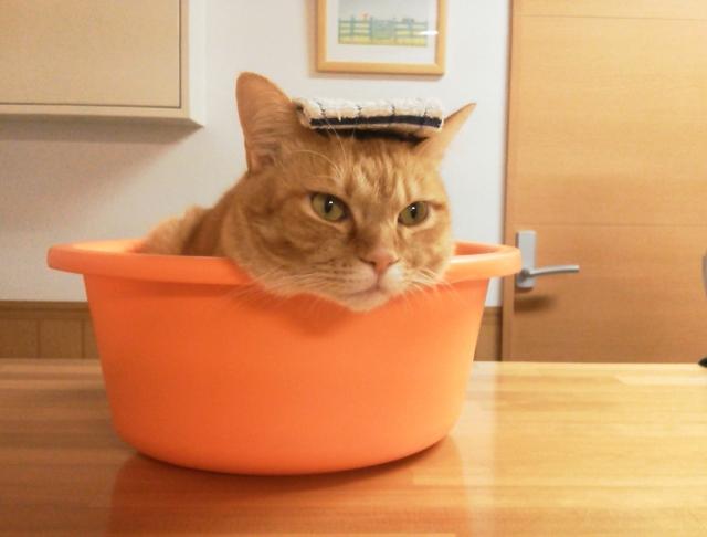 猫と一緒にお風呂に入ろう!猫をお風呂に入れる方法
