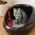 アイリスオーヤマのオープンタイプの猫トイレ