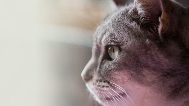 猫を飼うデメリットと対策のポイント!
