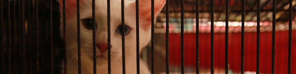 保健所から保護猫を引き取る