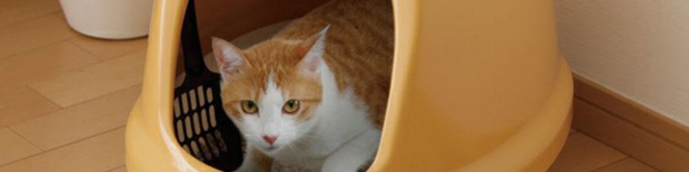 ドームタイプの猫トイレ
