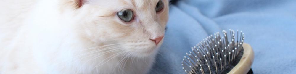 猫種に合ったブラッシングの種類