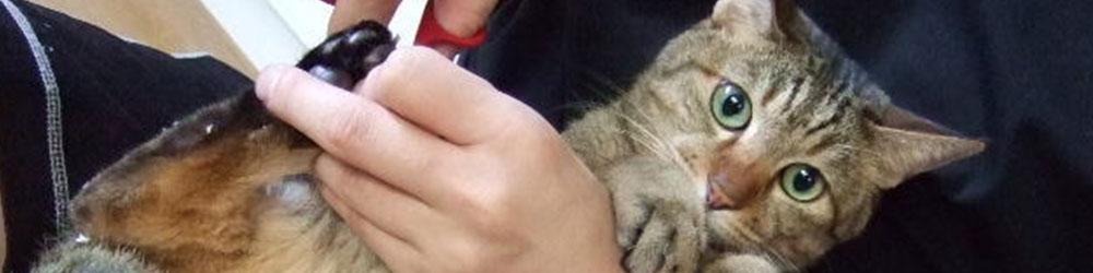 簡単にできる猫の爪を切る方法!