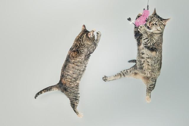 猫のおもちゃで猫と遊ぼう!