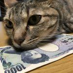 猫の飼育費用はいくらかかるのか!?気になる猫の初期費用から月々必要な飼育費用!!