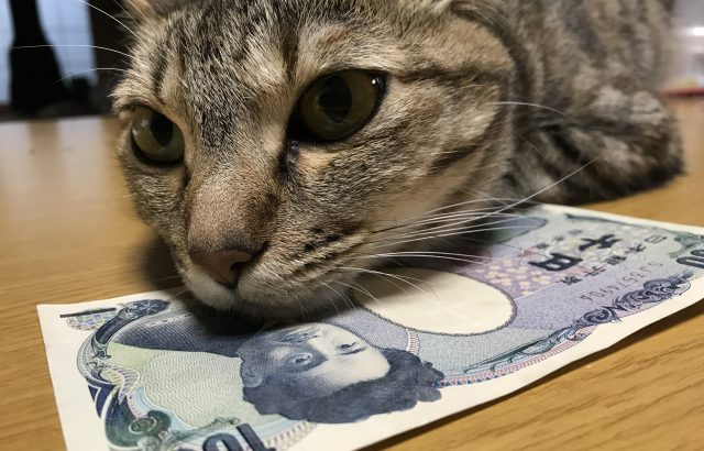 猫を飼うのにかかる費用