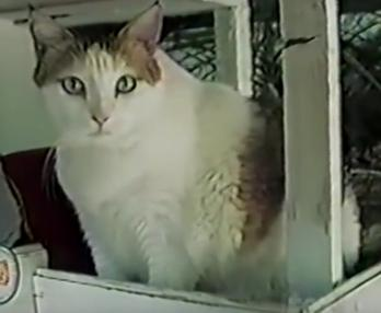 世界一の長寿猫「クリームパフ」