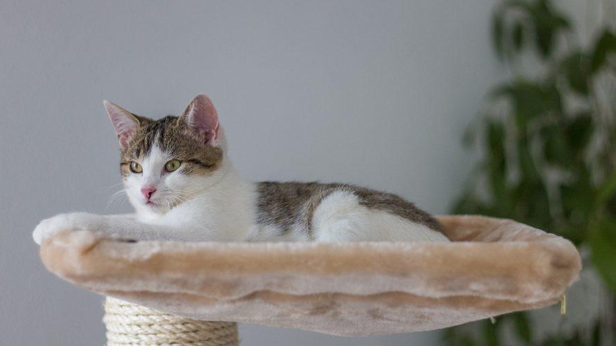 ずっと一緒に猫と暮らすために!猫の長寿7つの秘訣!!