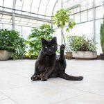 観葉植物でお部屋を彩る!猫がいても飾れる観葉植物12選