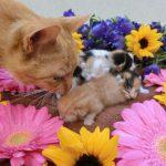 お花でお部屋を彩る!猫がいても飾れるお花7選