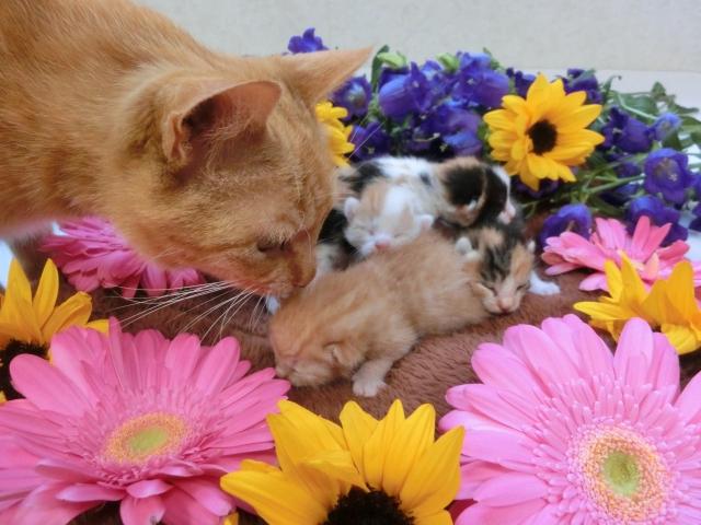 猫がいても飾れるお花7選