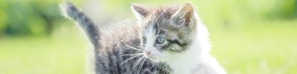 子猫期0歳~1歳