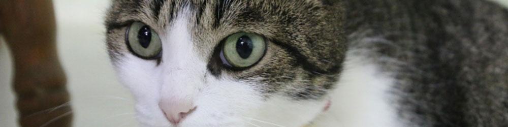 成猫期1歳~6歳