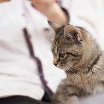 猫の年齢って人間に例えると何歳ぐらい?年齢換算ツールもあるよ♪