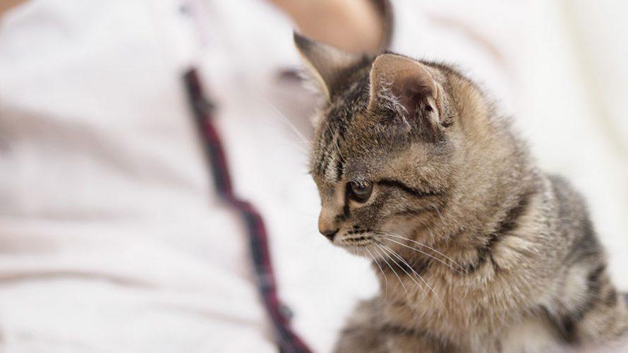 猫の年齢って人間に例えるといくつになるの?