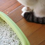 猫が下痢をした!!その原因はストレス・体調不良、病気かも!?