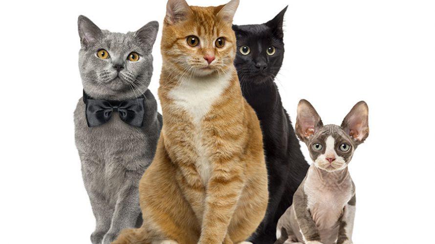 猫の種類は100種類以上!