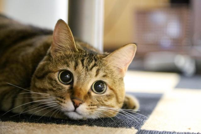 猫のヒゲは超重要な器官